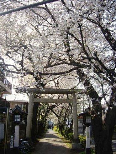 Sakura7_2